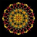 Yellow Lace  72